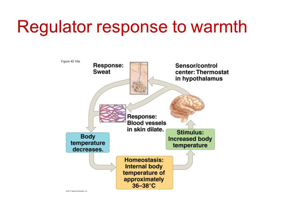 Regulator response to warmth