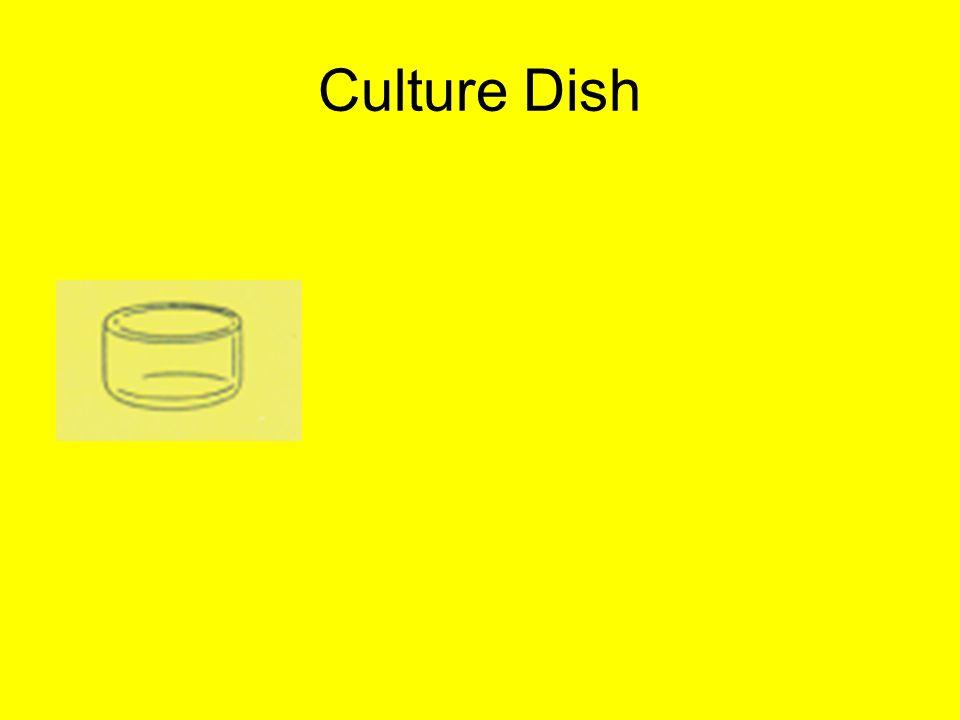 Culture Dish