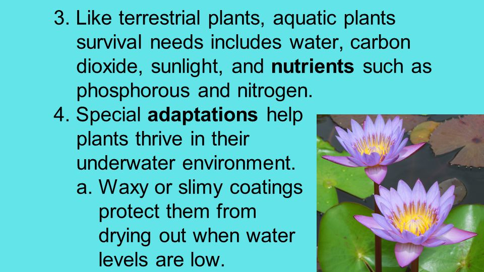 3. Like terrestrial plants, aquatic plants survival needs includes water, carbon dioxide, sunlight, and nutrients such as phosphorous and nitrogen. 4.