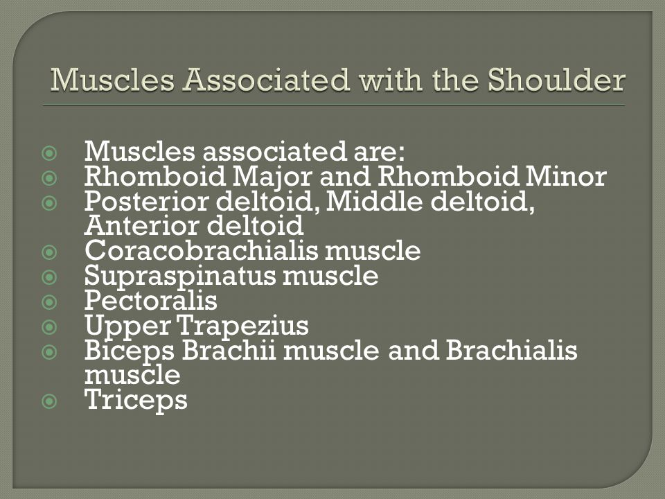  Muscles associated are:  Rhomboid Major and Rhomboid Minor  Posterior deltoid, Middle deltoid, Anterior deltoid  Coracobrachialis muscle  Supraspinatus muscle  Pectoralis  Upper Trapezius  Biceps Brachii muscle and Brachialis muscle  Triceps