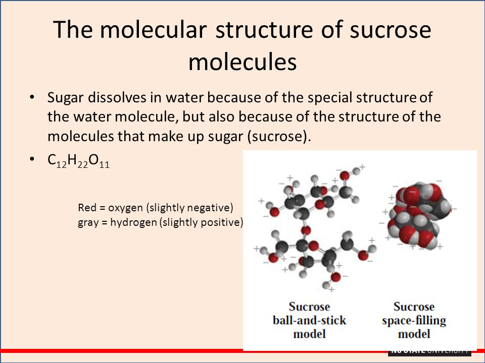 The molecular structure of sucrose molecules Sugar dissolves in water because of the special structure of the water molecule, but also because of the