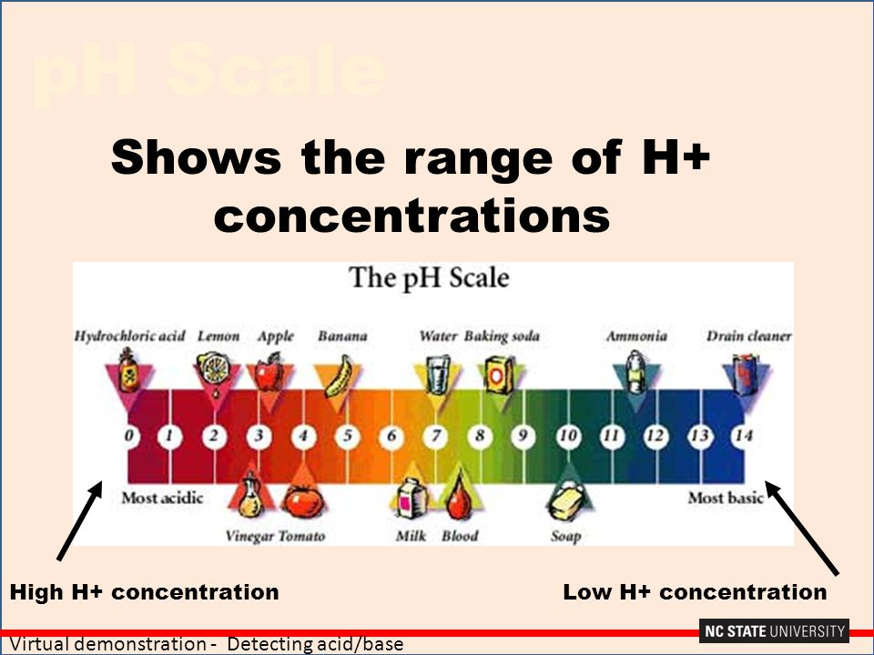 pH Scale Shows the range of H+ concentrations High H+ concentrationLow H+ concentration Virtual demonstration - Detecting acid/base