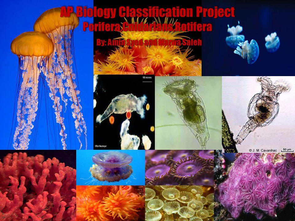 AP Biology Classification Project Porifera,Cnidarians,Rotifera By: Amin Syed and Marwa Saleh