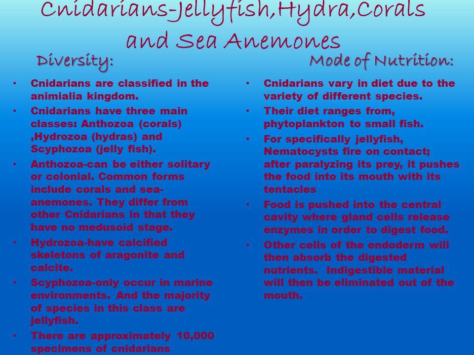Cnidarians-Jellyfish,Hydra,Corals and Sea Anemones Cnidarians are classified in the animialia kingdom. Cnidarians have three main classes: Anthozoa (c
