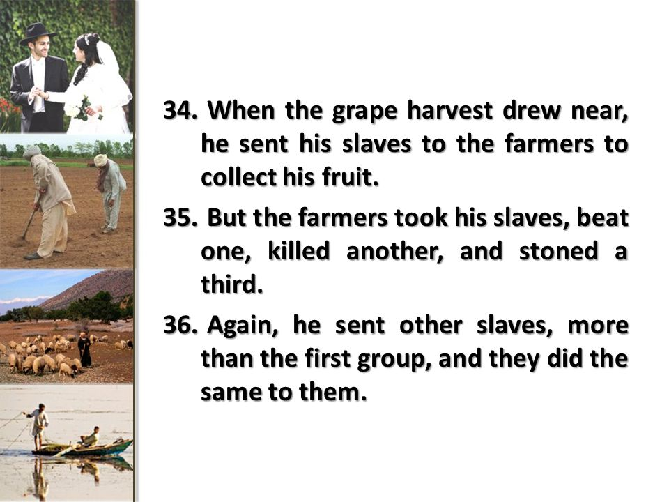 34.When the grape harvest drew near, he sent his slaves to the farmers to collect his fruit.