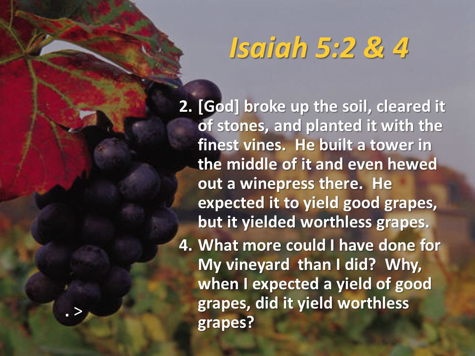 Isaiah 5:2 & 4 2.[God] broke up the soil, cleared it of stones, and planted it with the finest vines.