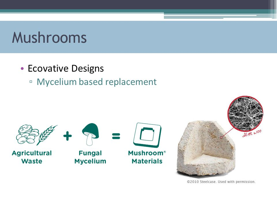 Mushrooms Ecovative Designs ▫ Mycelium based replacement