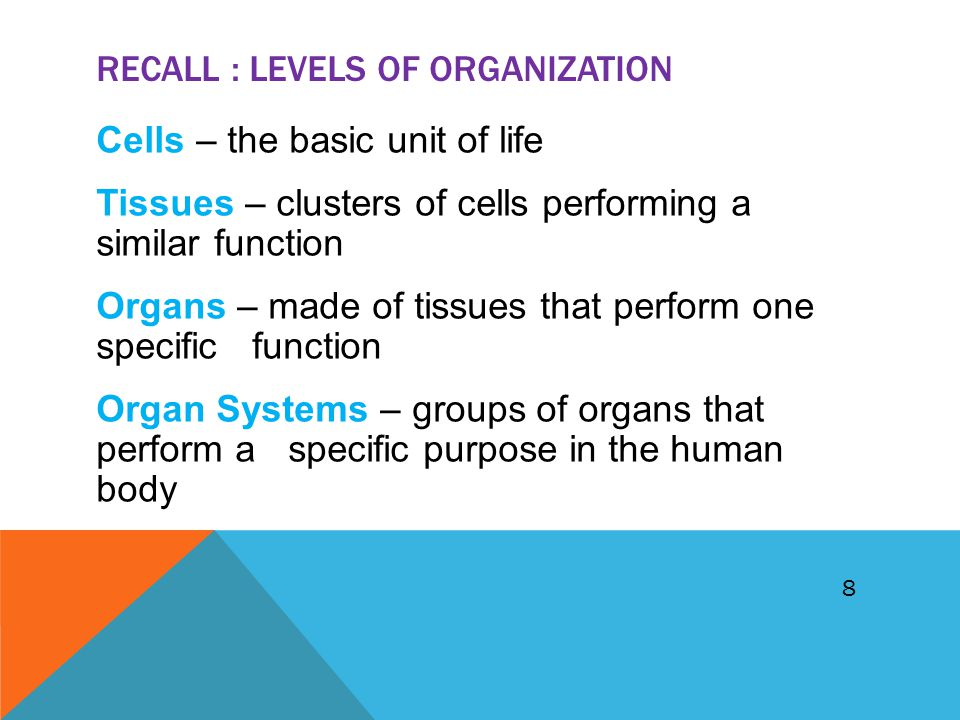 RECALL : LEVELS OF ORGANIZATION Cells – the basic unit of life Tissues – clusters of cells performing a similar function Organs – made of tissues that