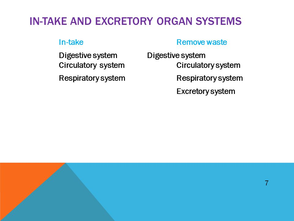 IN-TAKE AND EXCRETORY ORGAN SYSTEMS In-takeRemove waste Digestive systemDigestive system Circulatory system Circulatory systemRespiratory system Excre