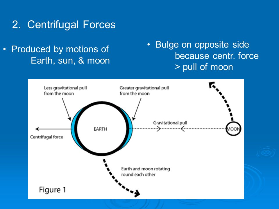 2. Centrifugal Forces Produced by motions of Earth, sun, & moon Bulge on opposite side because centr. force > pull of moon