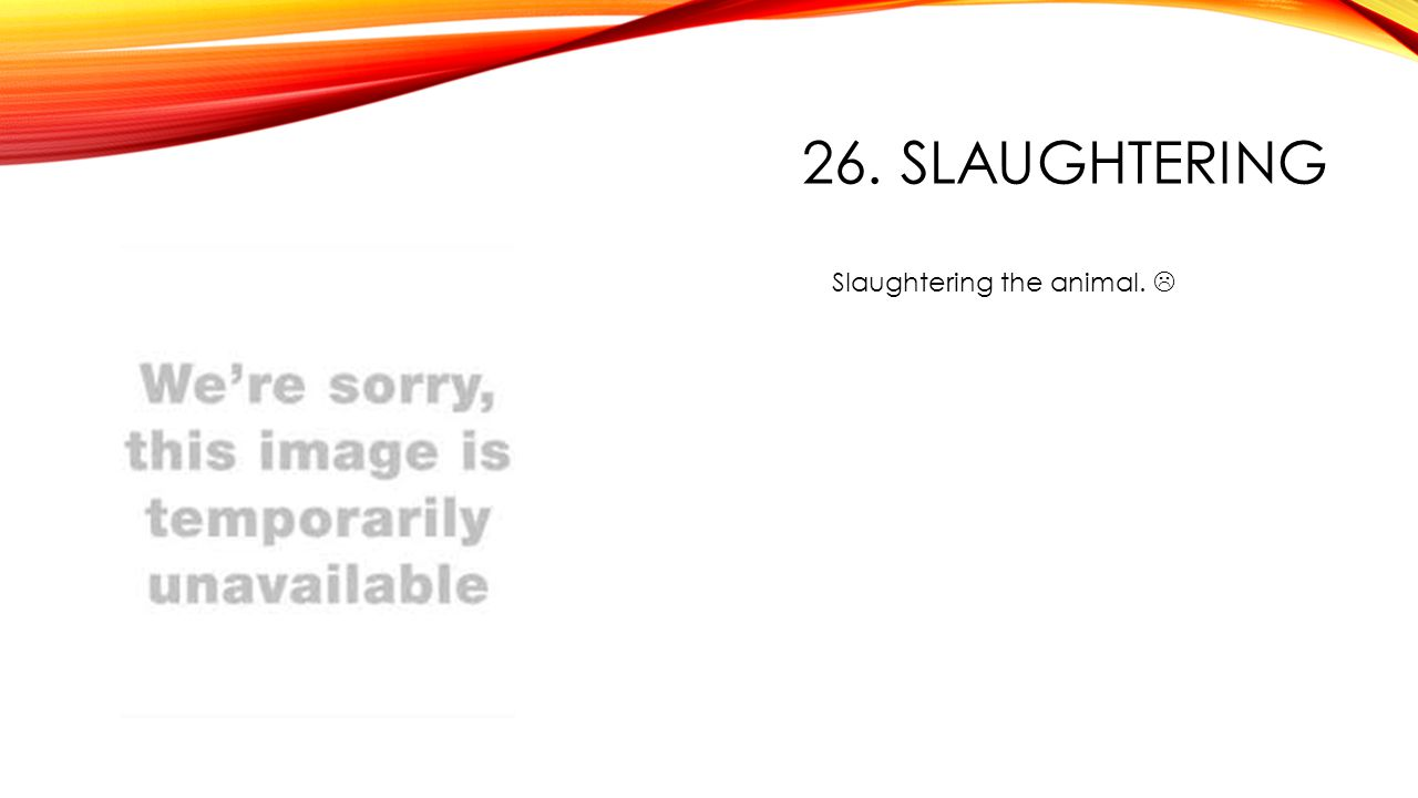 26. SLAUGHTERING Slaughtering the animal. 