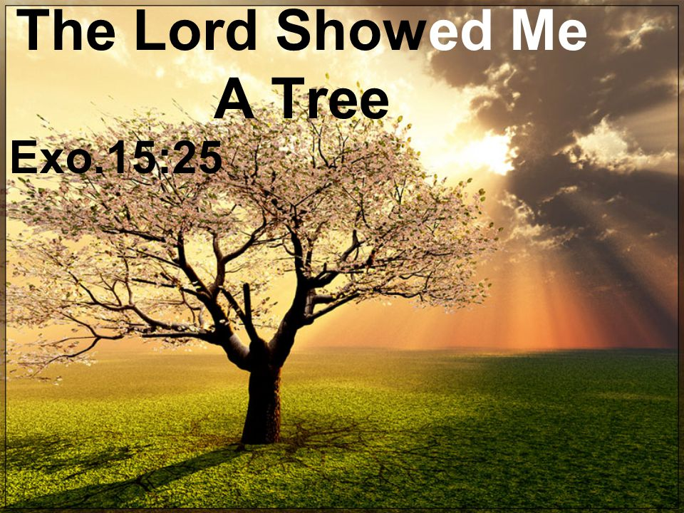 The Lord Showed Me A Tree Exo.15:25