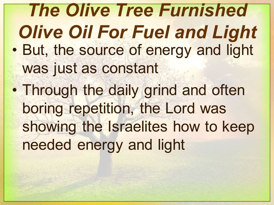 The Olive Tree Furnished Olive Oil For Fuel and Light But, the source of energy and light was just as constant Through the daily grind and often boring repetition, the Lord was showing the Israelites how to keep needed energy and light
