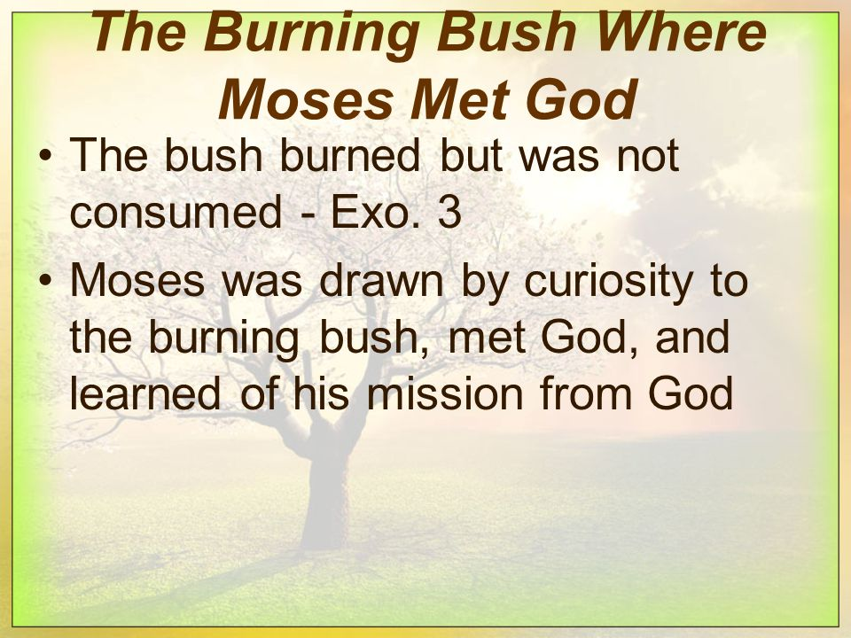 The Burning Bush Where Moses Met God The bush burned but was not consumed - Exo.