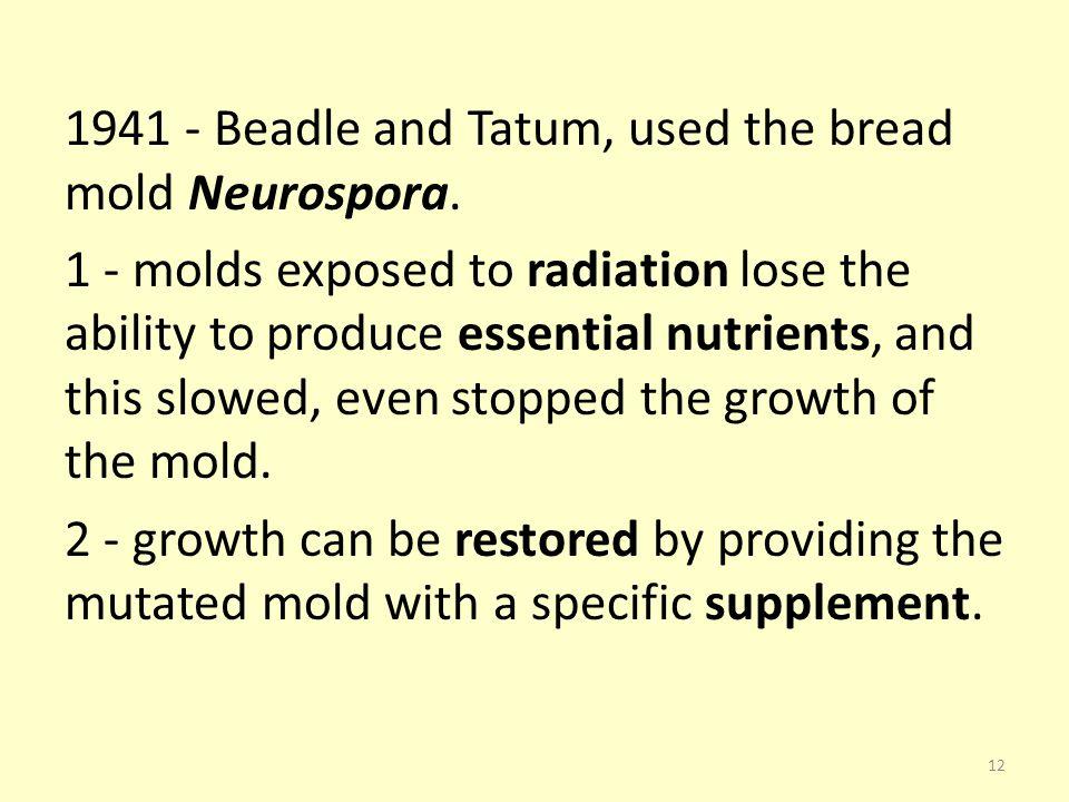 1941 - Beadle and Tatum, used the bread mold Neurospora.