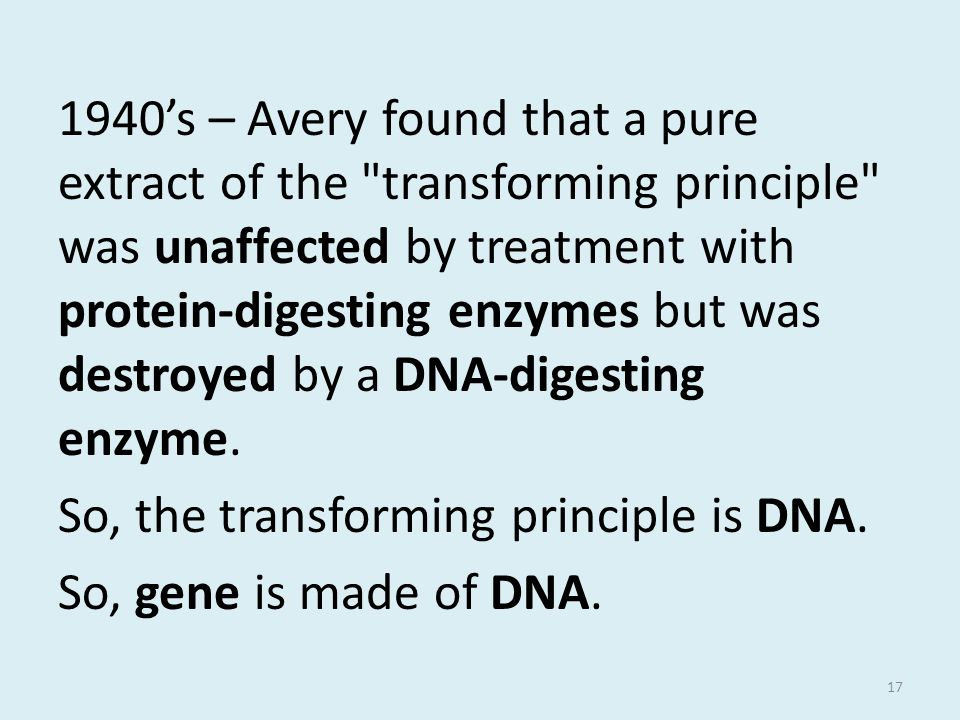 1940's – Avery found that a pure extract of the transforming principle was unaffected by treatment with protein-digesting enzymes but was destroyed by a DNA-digesting enzyme.