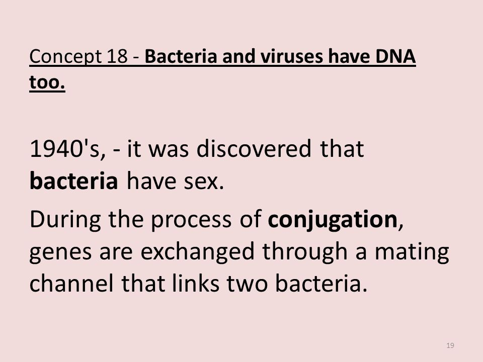 Concept 18 - Bacteria and viruses have DNA too.1940 s, - it was discovered that bacteria have sex.