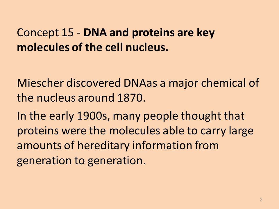 Concept 15 - DNA and proteins are key molecules of the cell nucleus.