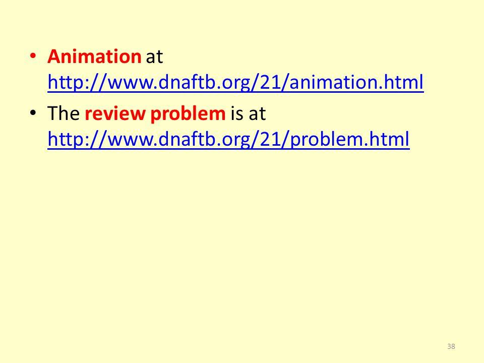 Animation at http://www.dnaftb.org/21/animation.html http://www.dnaftb.org/21/animation.html The review problem is at http://www.dnaftb.org/21/problem.html http://www.dnaftb.org/21/problem.html 38