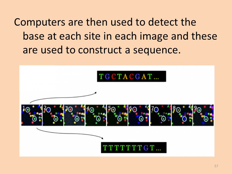 Computers are then used to detect the base at each site in each image and these are used to construct a sequence.