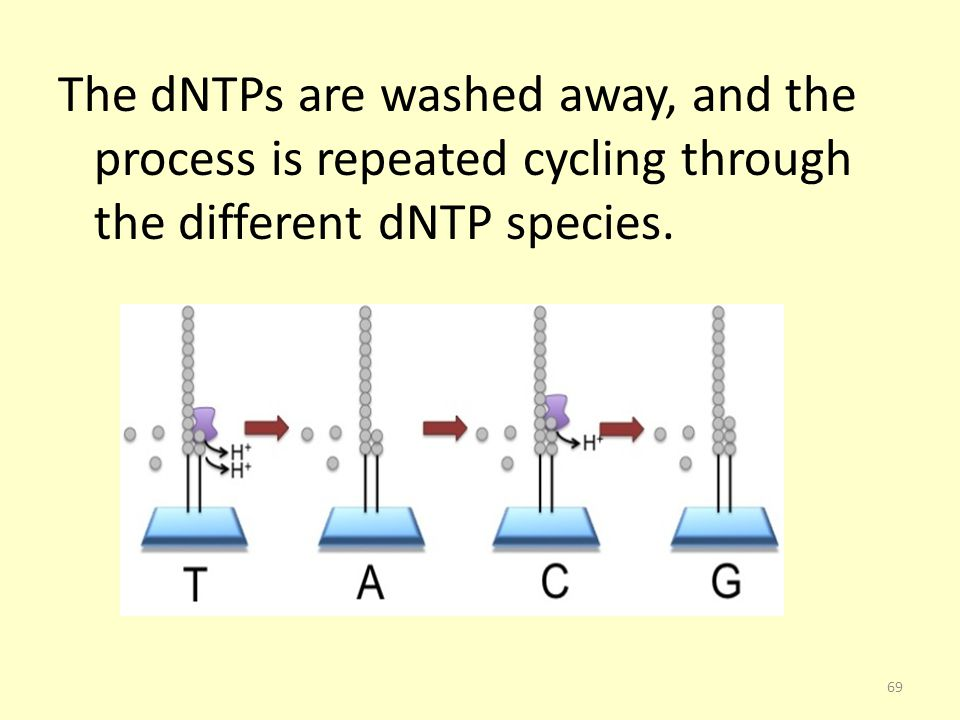 The dNTPs are washed away, and the process is repeated cycling through the different dNTP species.