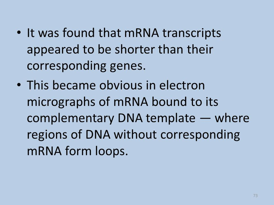It was found that mRNA transcripts appeared to be shorter than their corresponding genes.