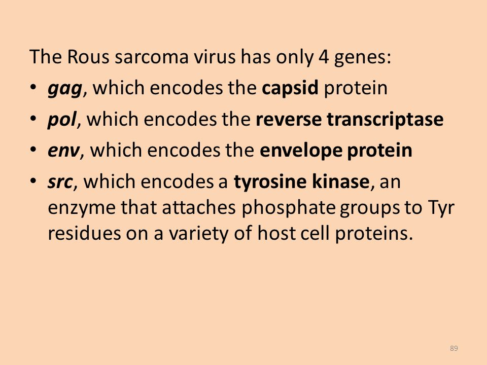 The Rous sarcoma virus has only 4 genes: gag, which encodes the capsid protein pol, which encodes the reverse transcriptase env, which encodes the envelope protein src, which encodes a tyrosine kinase, an enzyme that attaches phosphate groups to Tyr residues on a variety of host cell proteins.