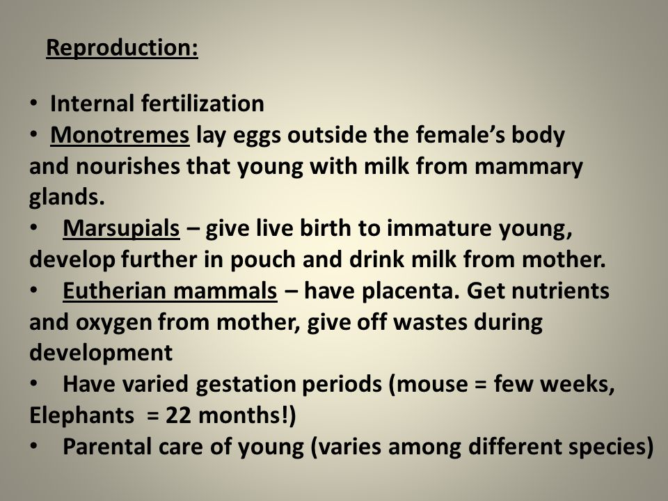 Reproduction: Internal fertilization Monotremes lay eggs outside the female's body and nourishes that young with milk from mammary glands. Marsupials