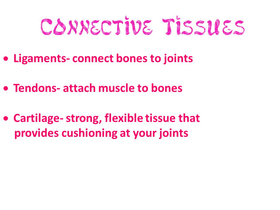  Ligaments- connect bones to joints  Tendons- attach muscle to bones  Cartilage- strong, flexible tissue that provides cushioning at your joints