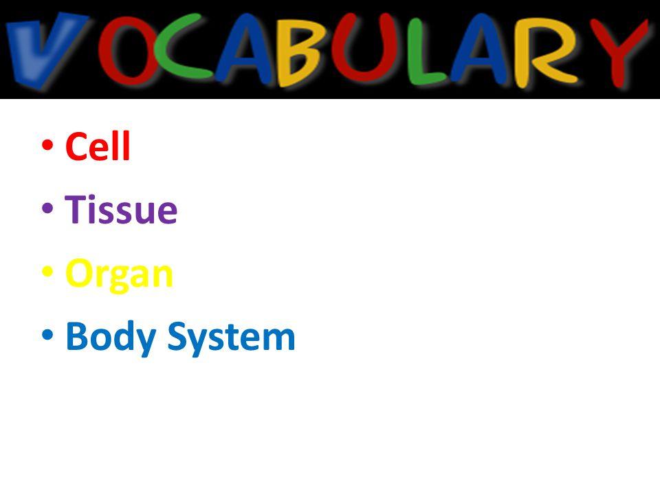 Cell Tissue Organ Body System