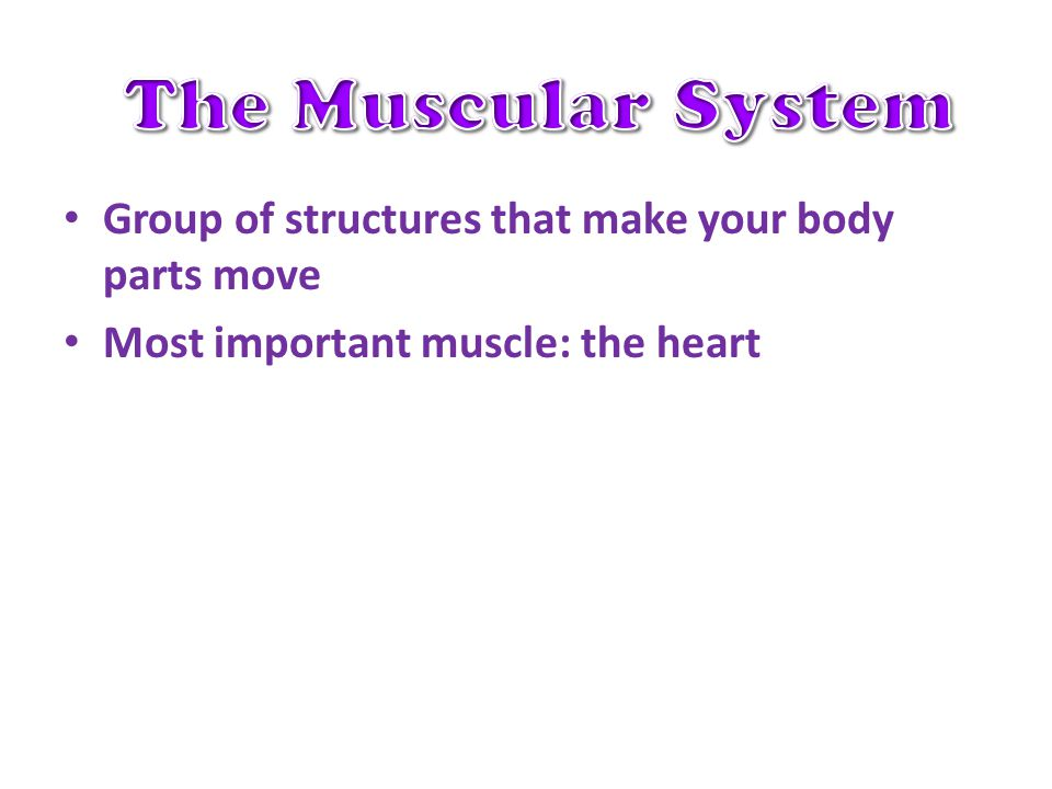Group of structures that make your body parts move Most important muscle: the heart