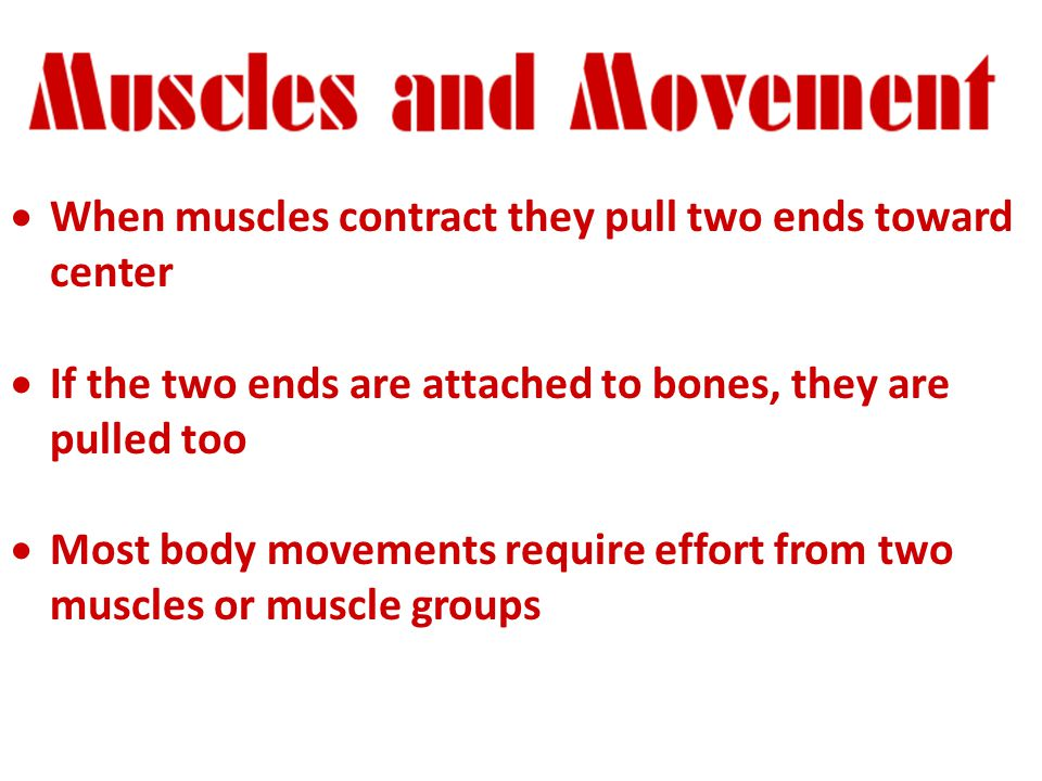  When muscles contract they pull two ends toward center  If the two ends are attached to bones, they are pulled too  Most body movements require effort from two muscles or muscle groups