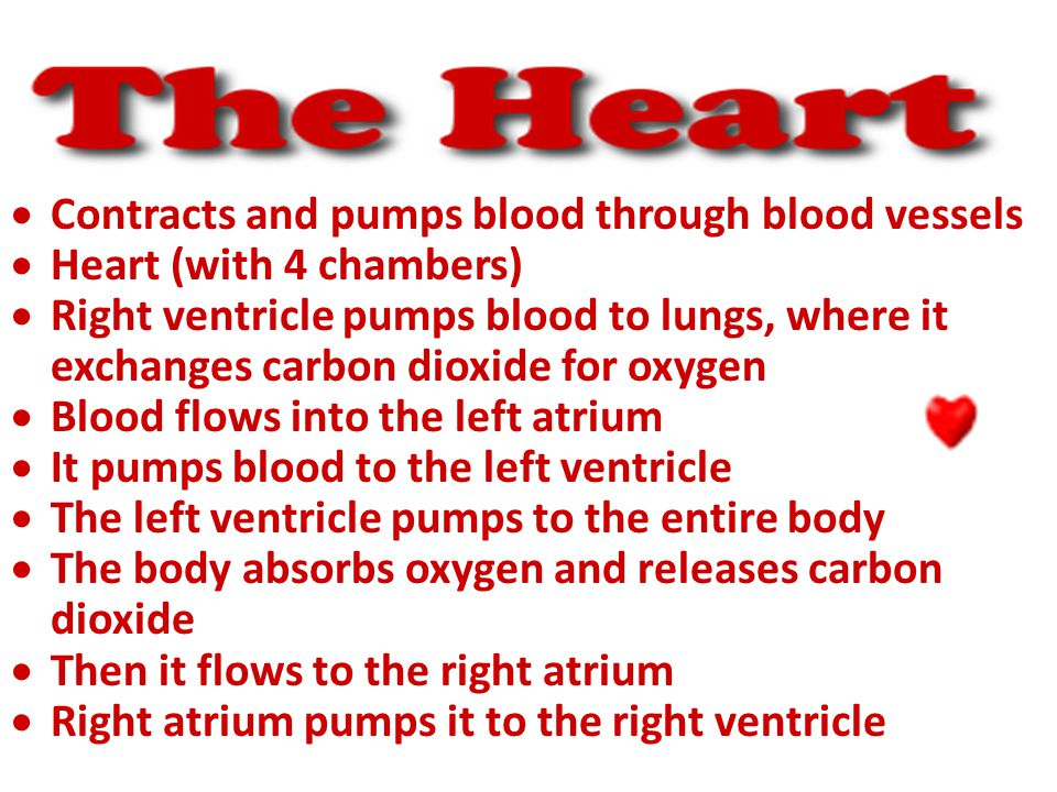  Contracts and pumps blood through blood vessels  Heart (with 4 chambers)  Right ventricle pumps blood to lungs, where it exchanges carbon dioxide for oxygen  Blood flows into the left atrium  It pumps blood to the left ventricle  The left ventricle pumps to the entire body  The body absorbs oxygen and releases carbon dioxide  Then it flows to the right atrium  Right atrium pumps it to the right ventricle
