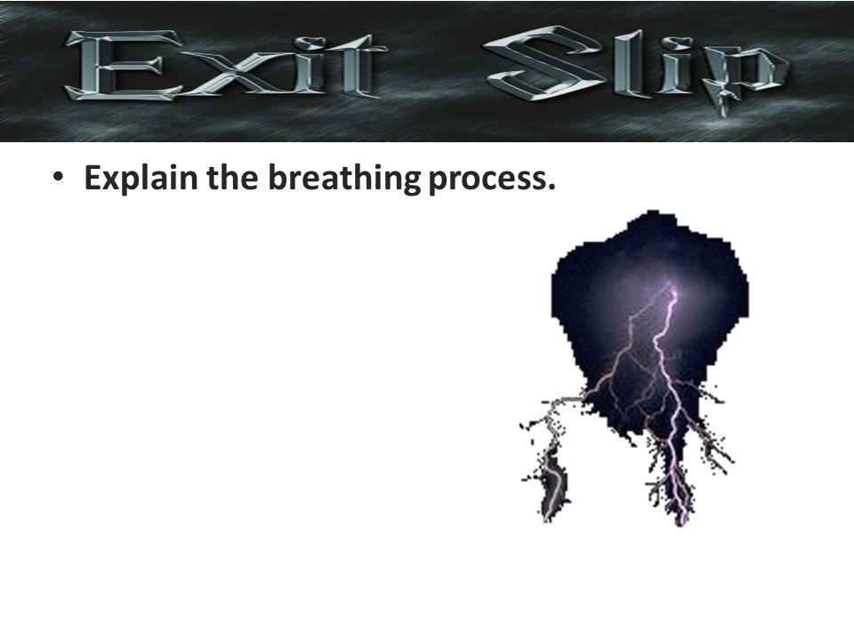 Explain the breathing process.