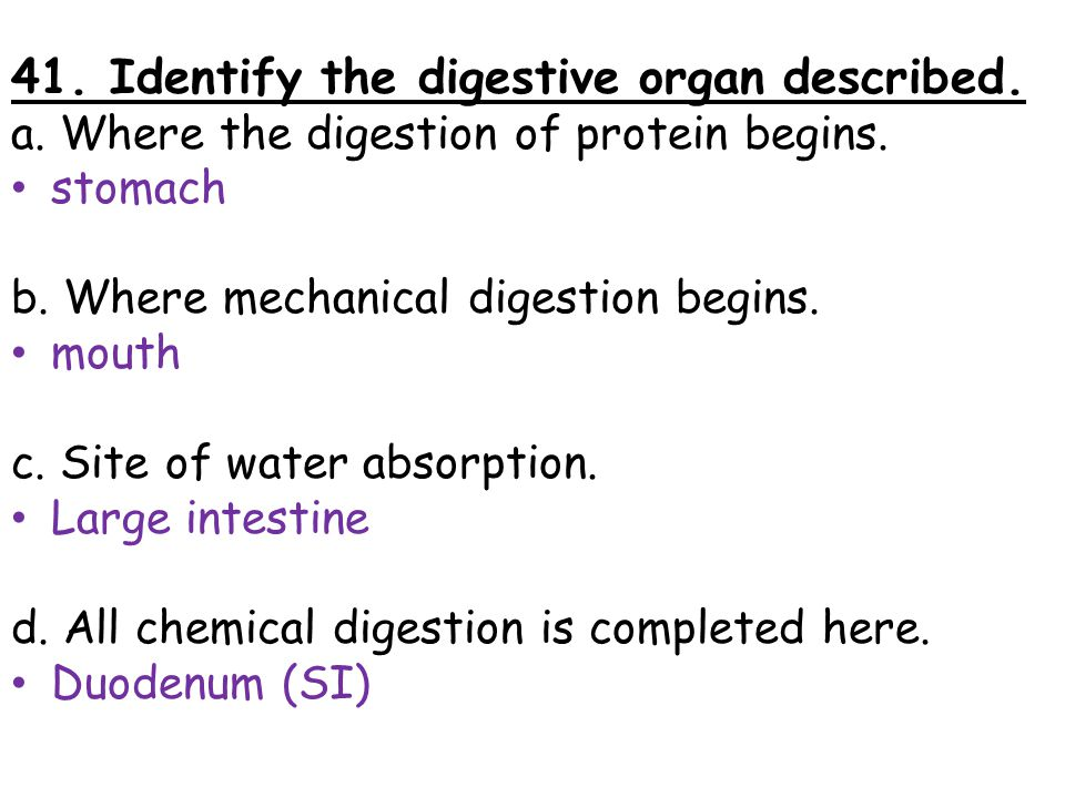 41. Identify the digestive organ described. a. Where the digestion of protein begins. stomach b. Where mechanical digestion begins. mouth c. Site of w