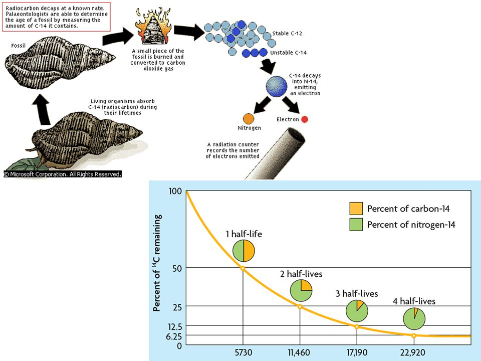 Radiometric Dating Helps determine age of fossils.