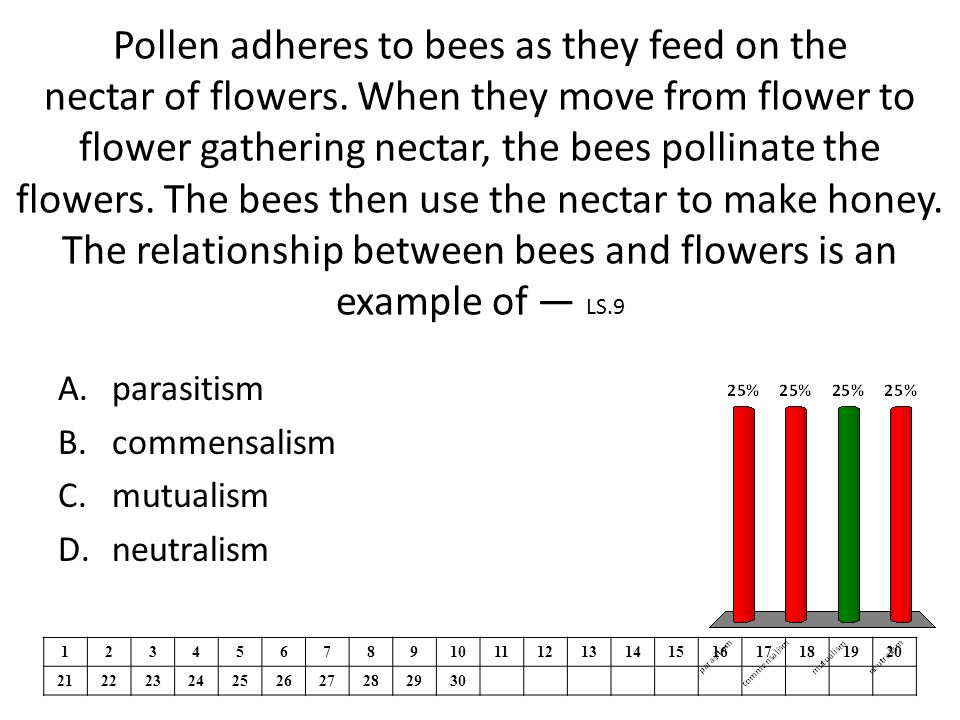 Pollen adheres to bees as they feed on the nectar of flowers.