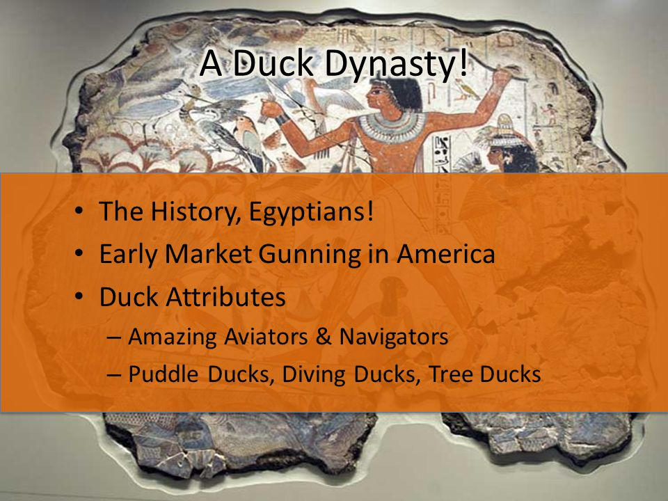 The History, Egyptians! Early Market Gunning in America Duck Attributes – Amazing Aviators & Navigators – Puddle Ducks, Diving Ducks, Tree Ducks