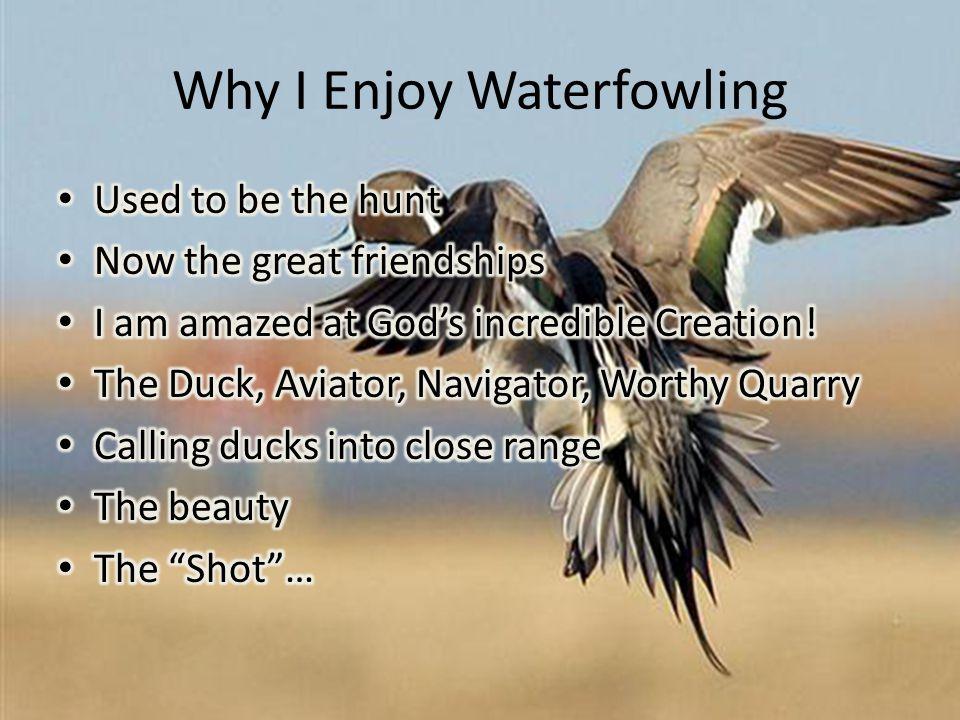 Why I Enjoy Waterfowling