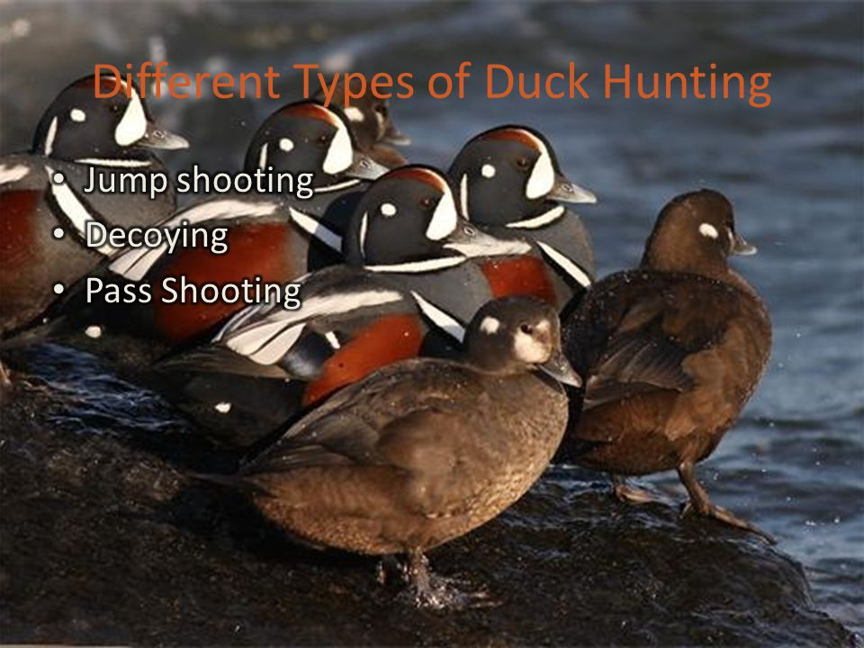 Aahhhh….The Gear… Waders, chest or hip Coats, Hats, Sweaters, UnderArmor, Gloves GUNS & AMMO!