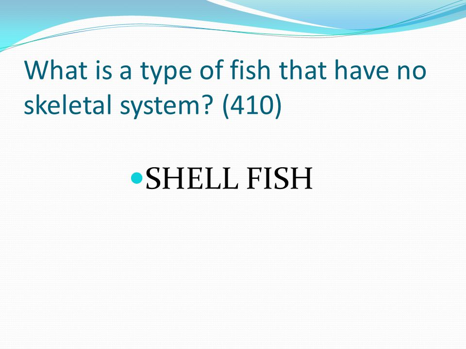 What is a type of fish that have no skeletal system? (410) SHELL FISH