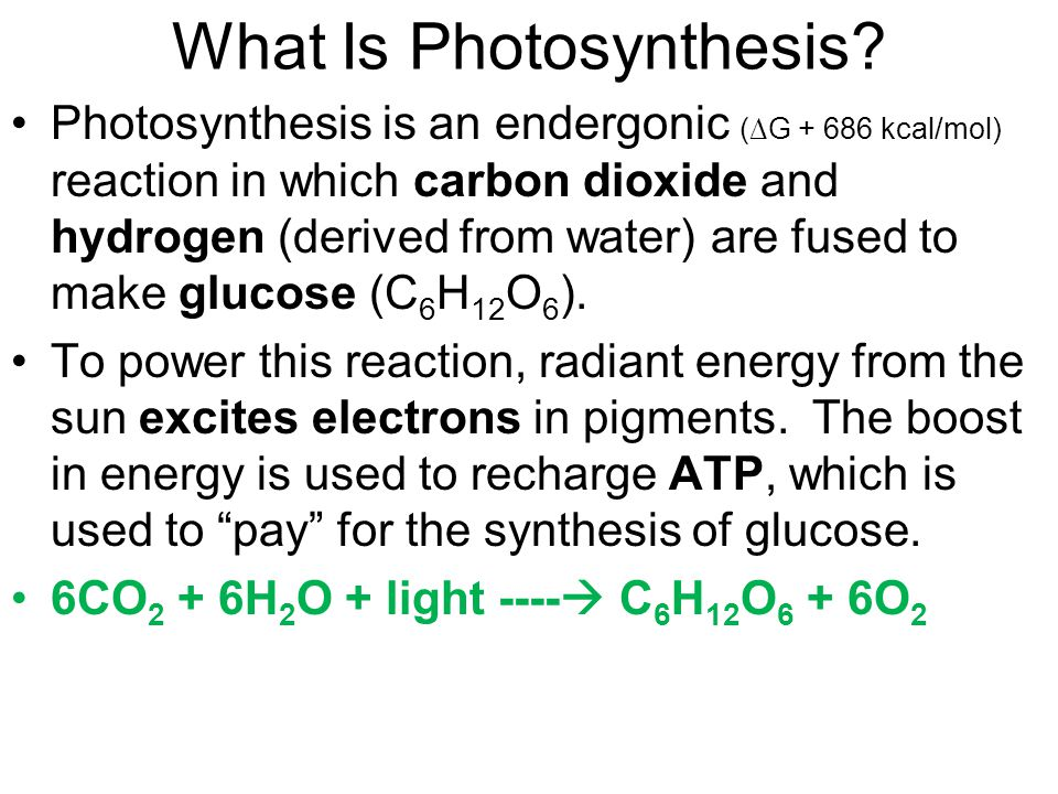 What Is Photosynthesis.