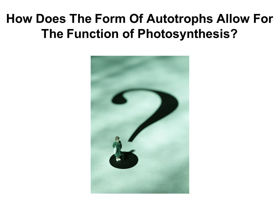 How Does The Form Of Autotrophs Allow For The Function of Photosynthesis?