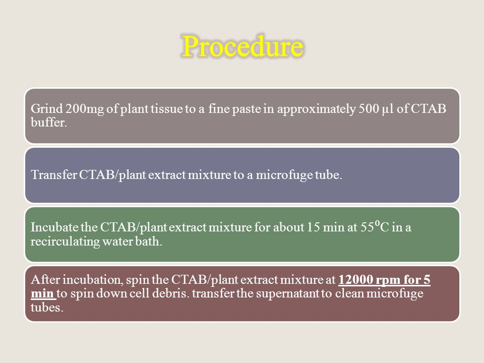 Grind 200mg of plant tissue to a fine paste in approximately 500 µl of CTAB buffer.
