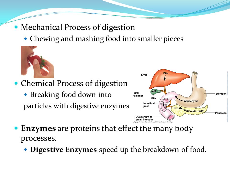Mechanical Process of digestion Chewing and mashing food into smaller pieces Chemical Process of digestion Breaking food down into particles with dige