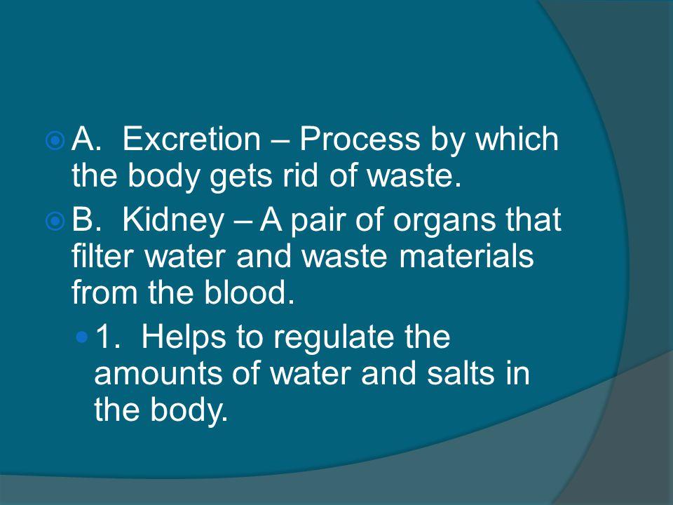 II. Excretory System