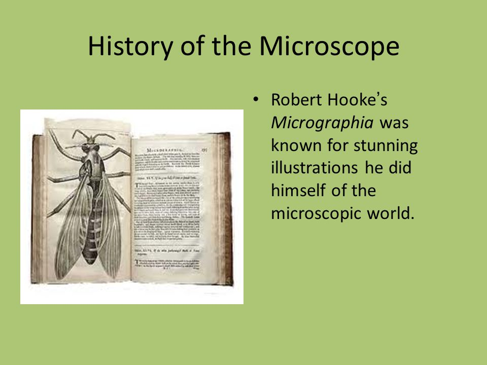 History of the Microscope Robert Hooke ' s Micrographia was known for stunning illustrations he did himself of the microscopic world.