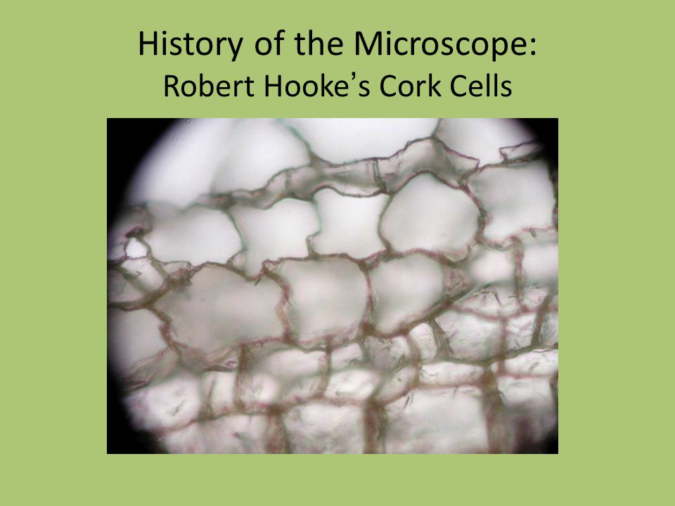 History of the Microscope: Robert Hooke ' s Cork Cells
