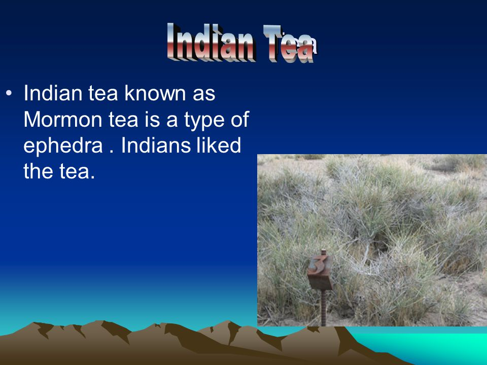 Indian Tea Indian tea known as Mormon tea is a type of ephedra. Indians liked the tea.