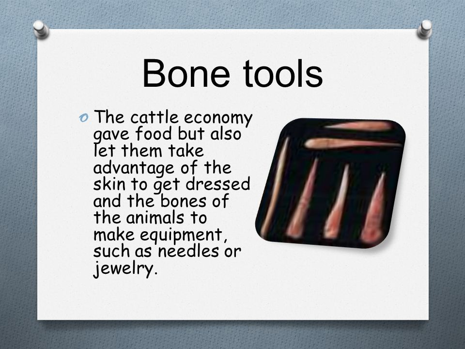 Bone tools o The cattle economy gave food but also let them take advantage of the skin to get dressed and the bones of the animals to make equipment,